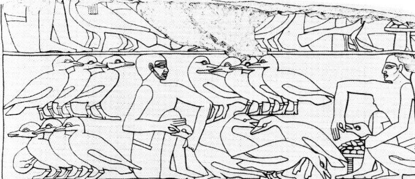 Un savoir-faire égyptien